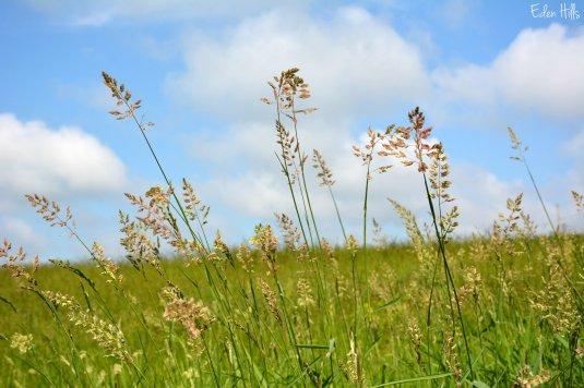 Grass_1145ew