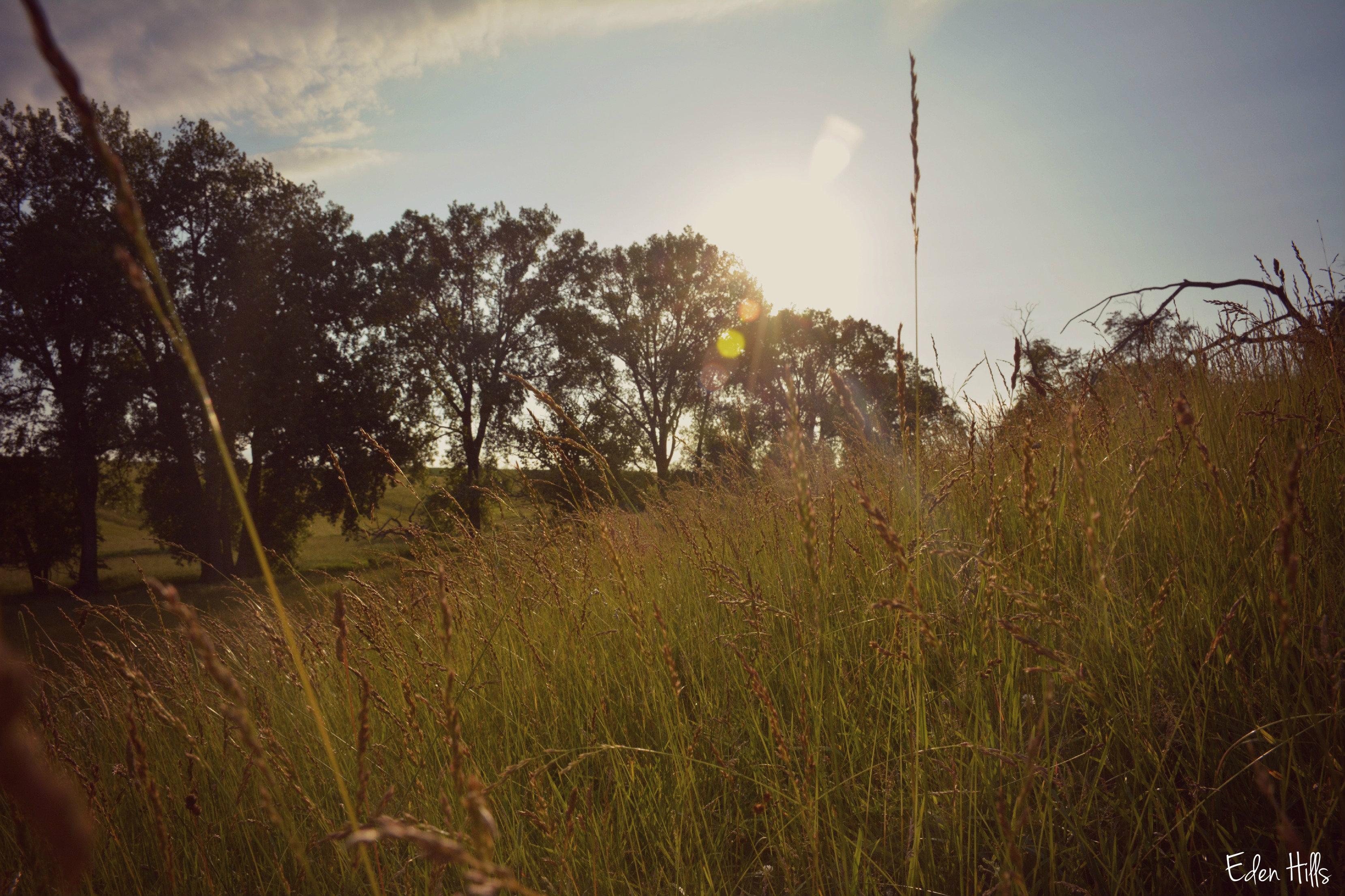 Evening eden hills for Eden hill walk in