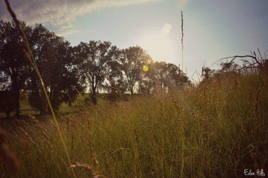 pasture_2396ew