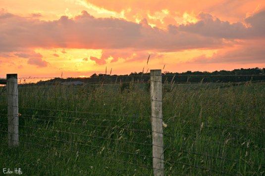 sunset fence_2049ew