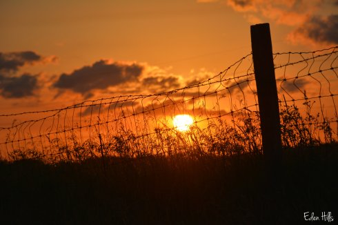 sunset fence_2506w