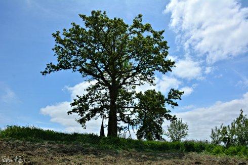 tree_0928ew