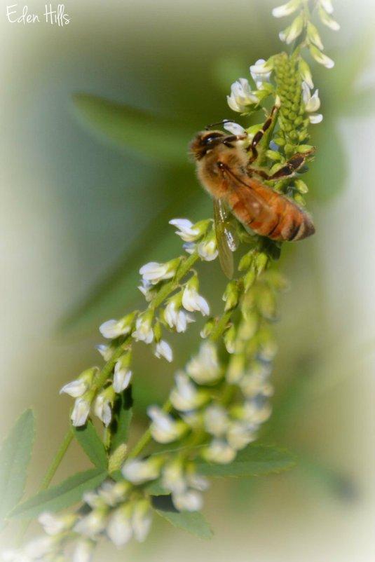 Bee_4062ew