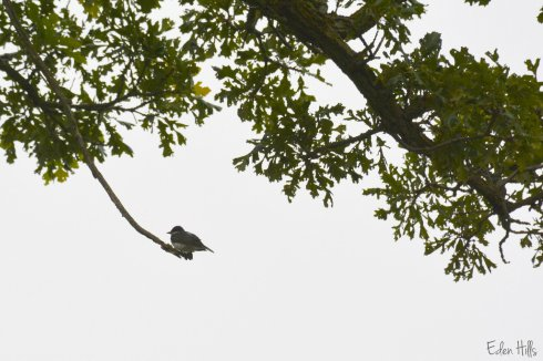 Bird_3110ew