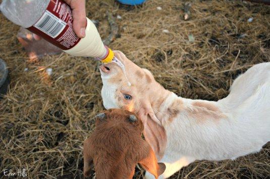 bottle kids_4641ew