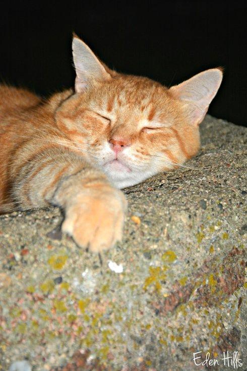 Cat in Birdbath_4658ew