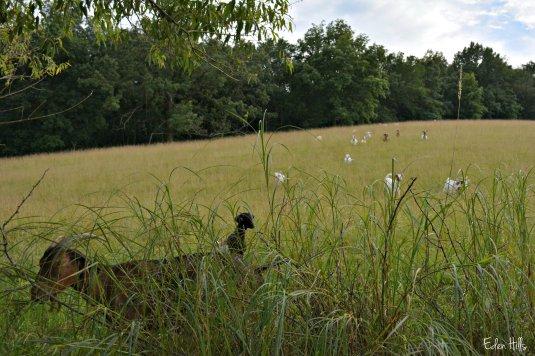 pasture_4208ew
