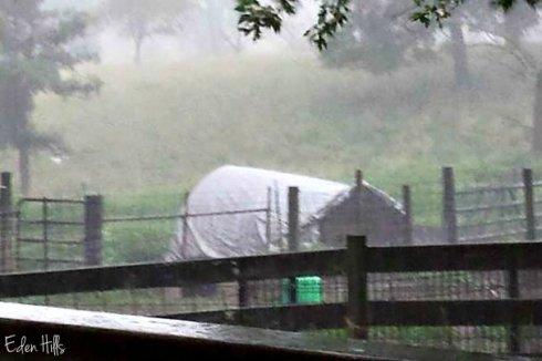 rain ew