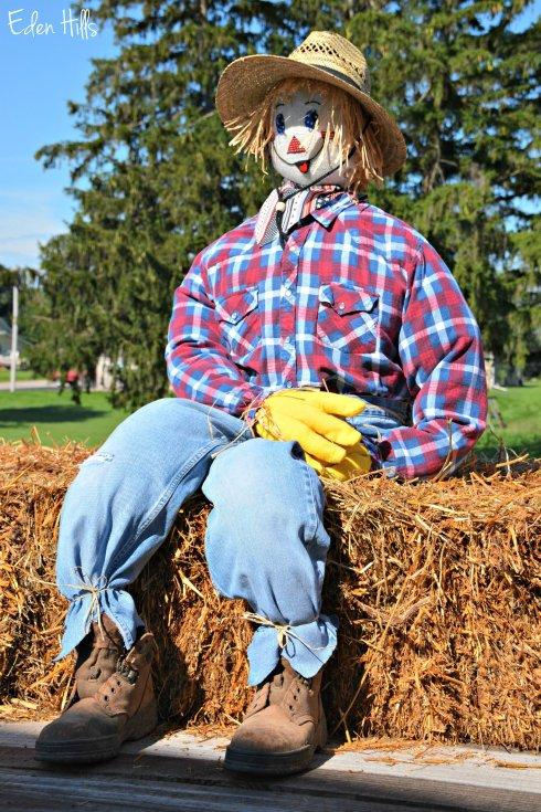 Scarecrow_4493ew