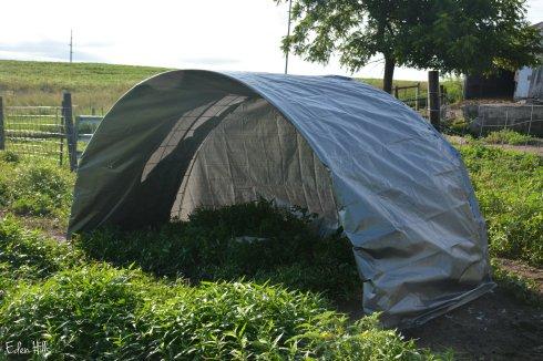 tarp shelter_3687w