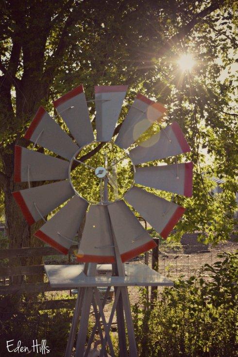 Windmill_4077ew