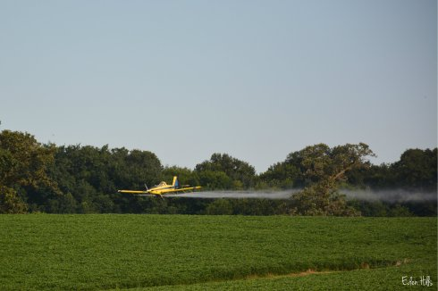 Cropduster_4749aw