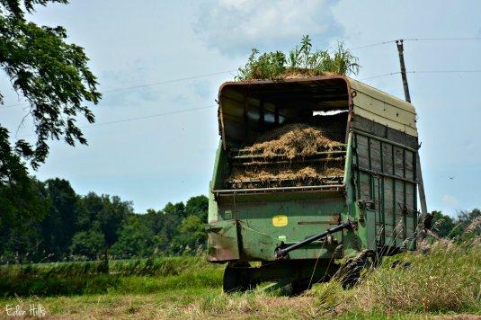 hay wagon_4810ew