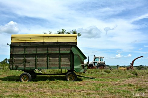hay wagon_4815ew