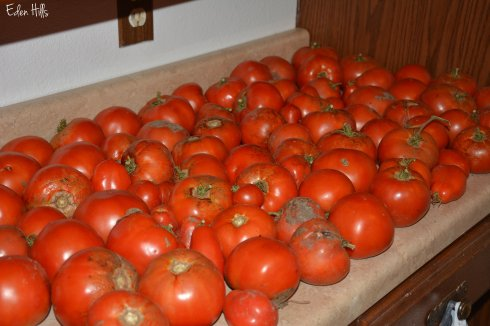 tomatoes_5882w
