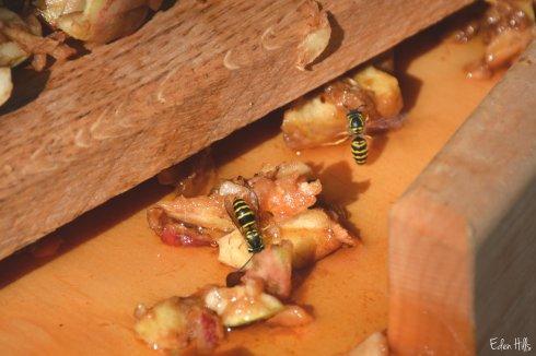 Bees_6286ew