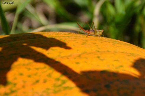 Bug_6472ew