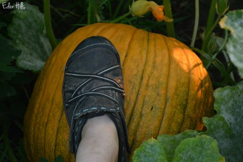 Pumpkin_6007w