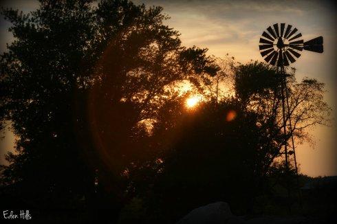 Windmill_5995ew