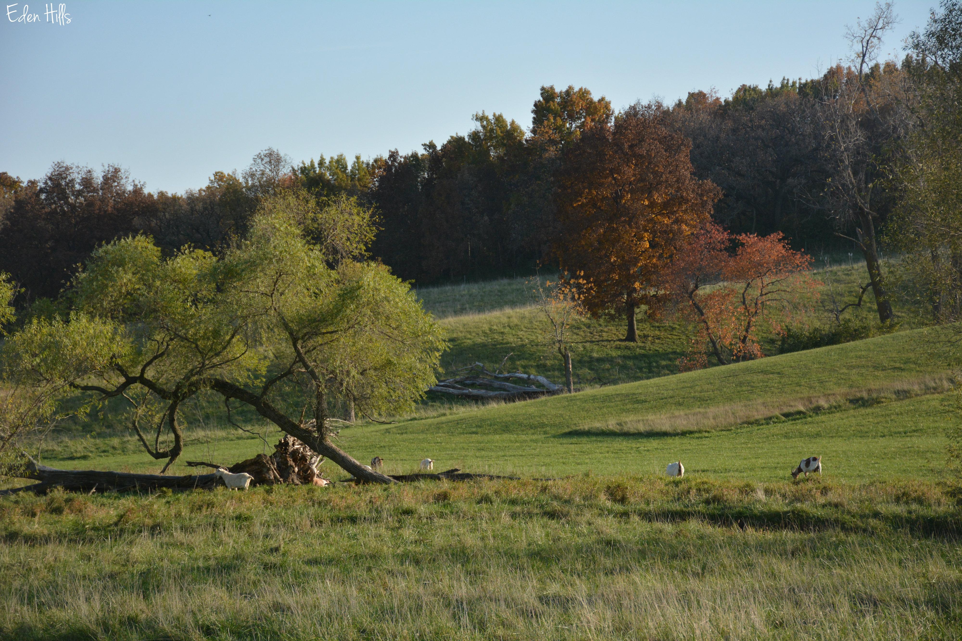 A stolen walk eden hills for Eden hill walk in