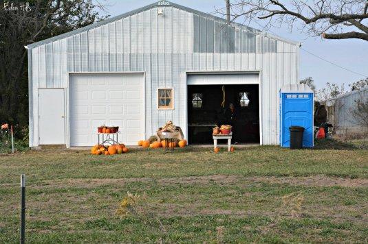 pumpkin patch_6924ew