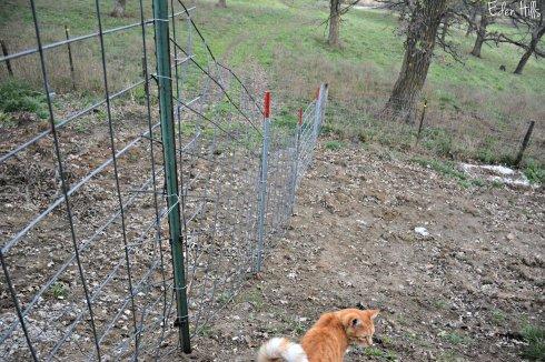 Fence_7193ew