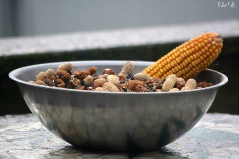 food bowl_7979ew