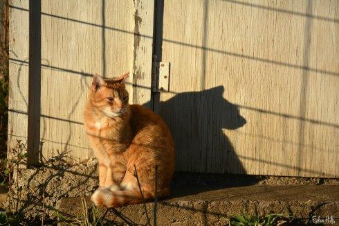 orange cat_7623ew