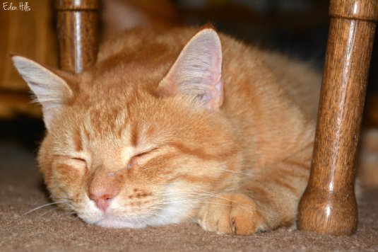 orange cat_7670ew