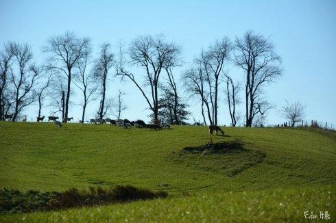 Pasture_7458ew