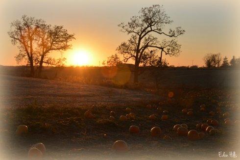 pumpkin sunset_7272ew