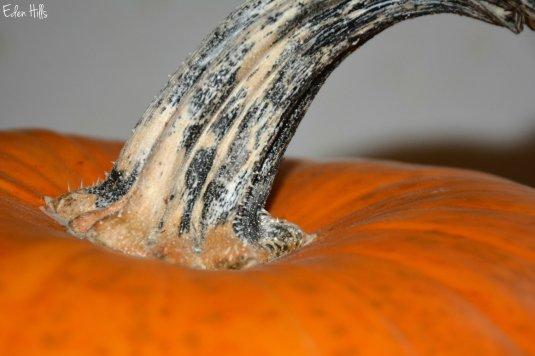 pumpkin_7896ew