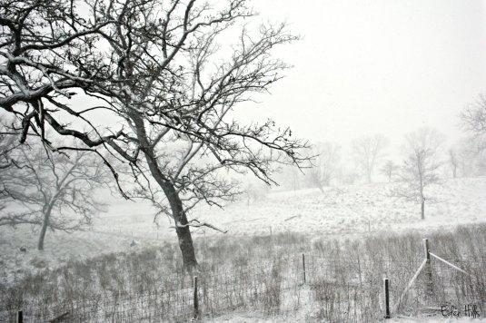 snow_7688ew