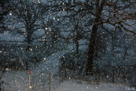 Snowfall_7683ew