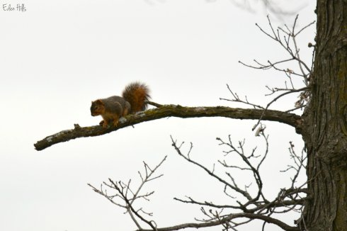 Squirrel_7966ew