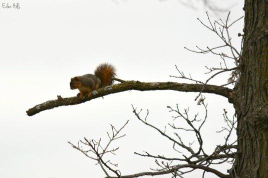 Squirrel_7966ew