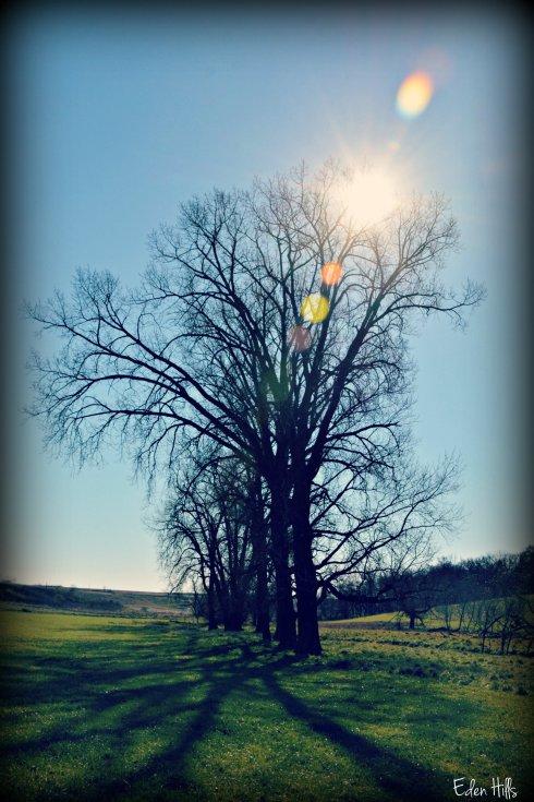 Sun Shadows_7566ew