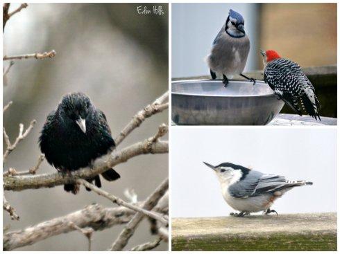 bird collage ew