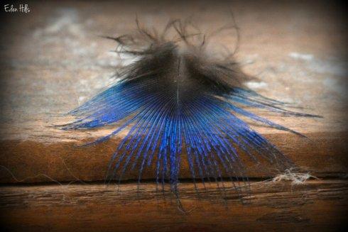 Feather_9601ew