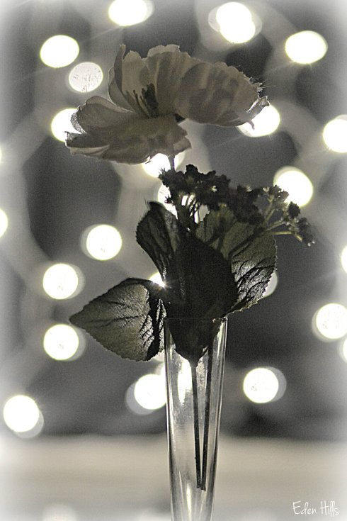 Flower bokeh_9615ew