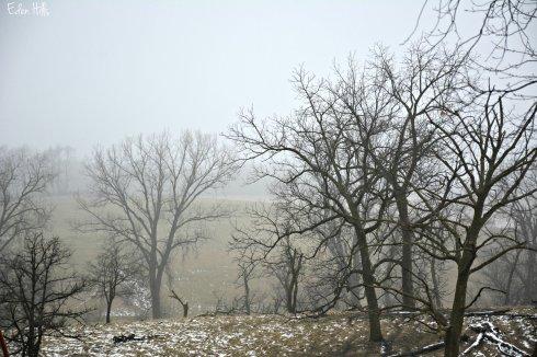 hazy pasture_9185ew