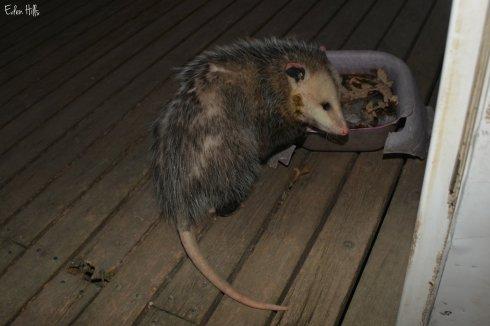 oppossum_8751aw