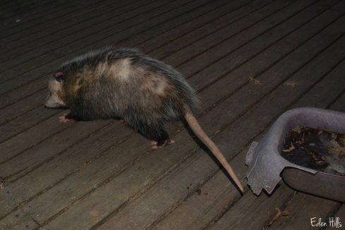 oppossum_8754aw