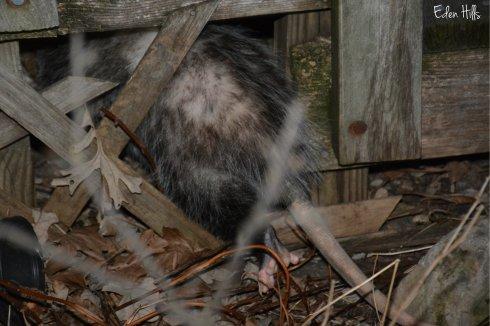 oppossum_8756aw