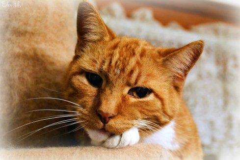 orange cat_9163ew