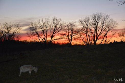 Saanen Sunset_8577ew