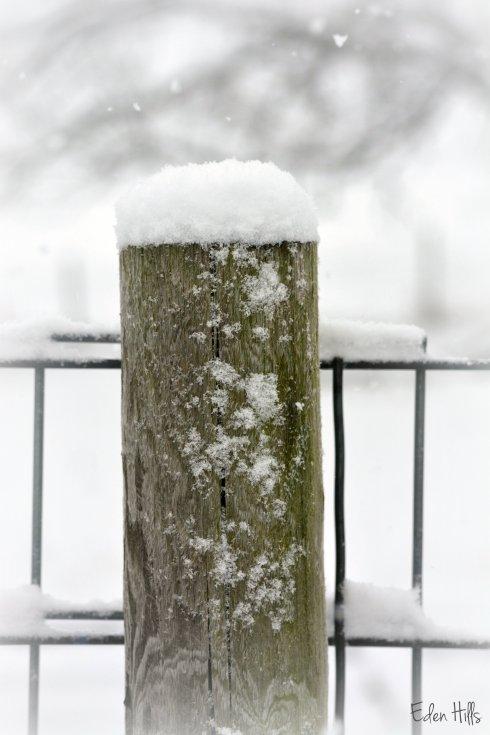 snowy fence post_9095ew