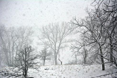 snowy pasture_9092ew