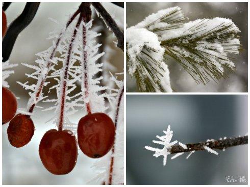 winter collage ew