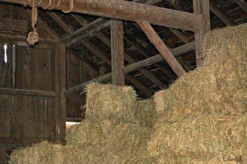 barn hay_0837ews